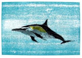 Freier Delphin, 2011