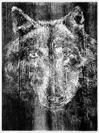 König Wolf, 2012
